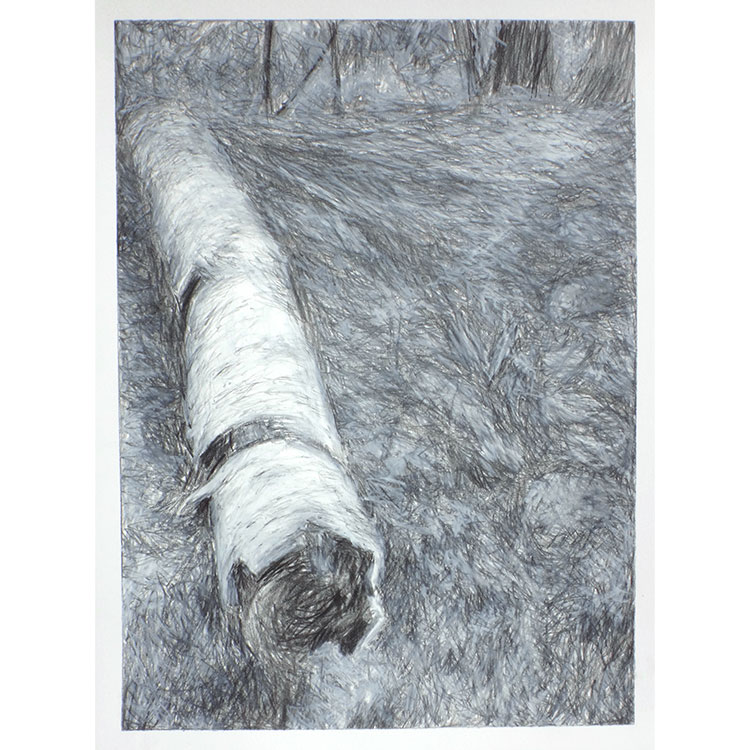 fallen birch VIII, graphite and mixed media on paper - photo by mielle harvey